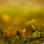 papel-de-parede-flores-amarelas-na-grama
