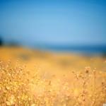 papel-de-parede-flores-horizonte