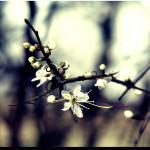papel-de-parede-flores-na-mata