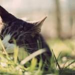papel-de-parede-gato