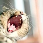 papel-de-parede-gato-com-sono