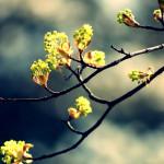papel-de-parede-natureza-bela (6)