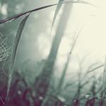 papel-de-parede-teia-de-aranha