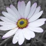 00124_flower_1680x1050