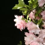 00352_flowerwall_1680x1050