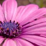 00661_flower14_1680x1050