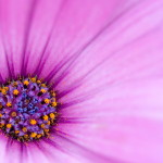 00925_flower21_1680x1050