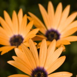 00984_flowers_1680x1050